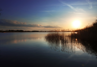 filby broad sunset with reeds