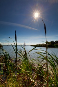 Photo of reeds and broads